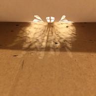 Creatures of light #2