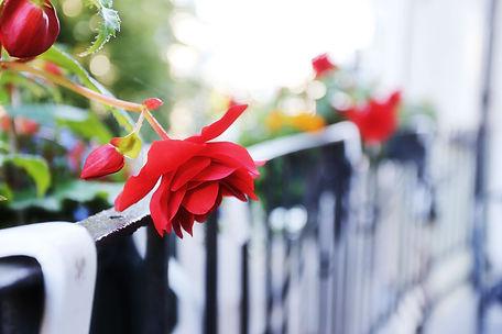 Flowers on the balcony in Tartu