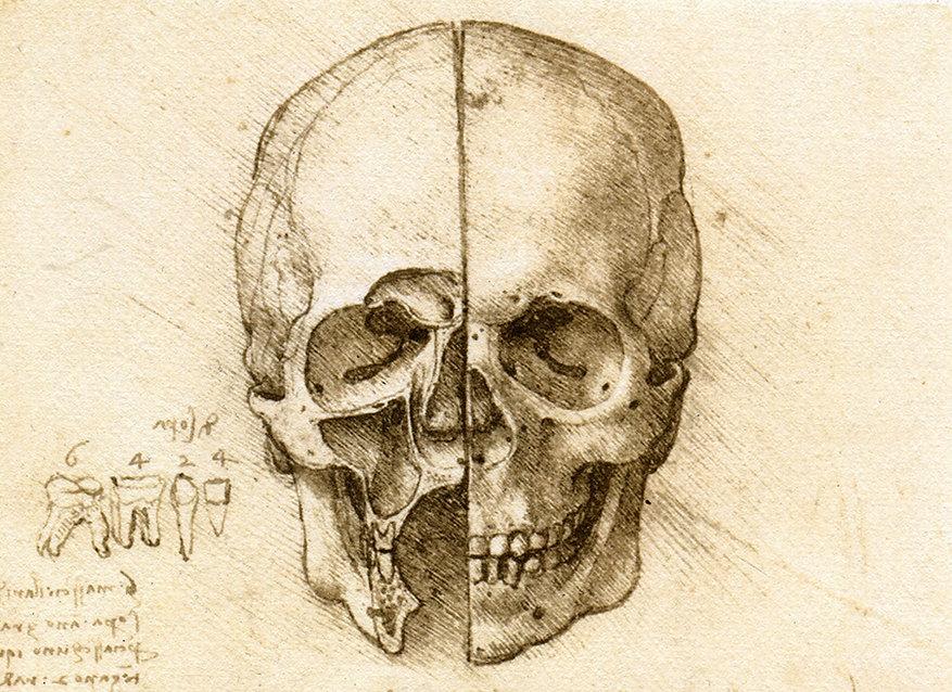 Leonardo - calavera.jpg