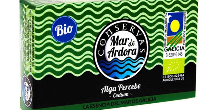 Alga percebe (codium) la natural lata mar de ardora 90 gr.