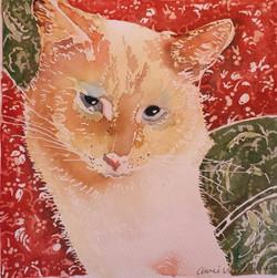 Jasper (Pet Portrait)