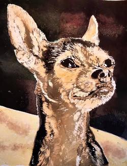 Daisy (Pet Portrait)