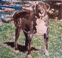 Rufus (Pet Portrait)
