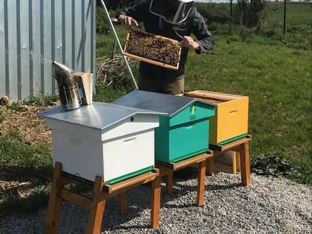 Des ruches à la MFR de Haussy