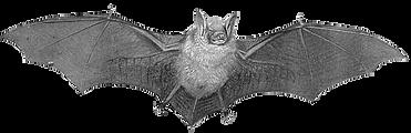 Bat-PNG-01.png