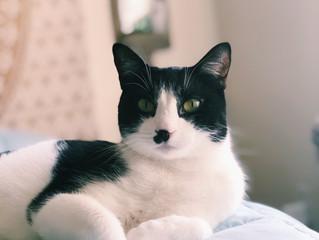 Kitty Cat's New Year