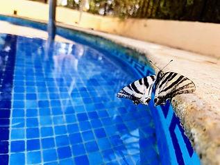 Pool butterfly.jpg