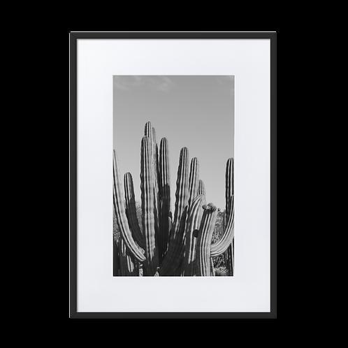 Cacti Madness Matte Paper Framed Poster