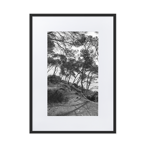 Forest by the Coast Matte Paper Framed Poster