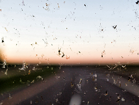 """""""Bauernopfer"""" - wer ist Schuld am Insektensterben?"""