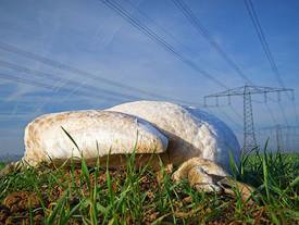 Todesfalle Stromleitungen