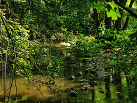 Naturpark Bayrischer Wald (Teil 1)