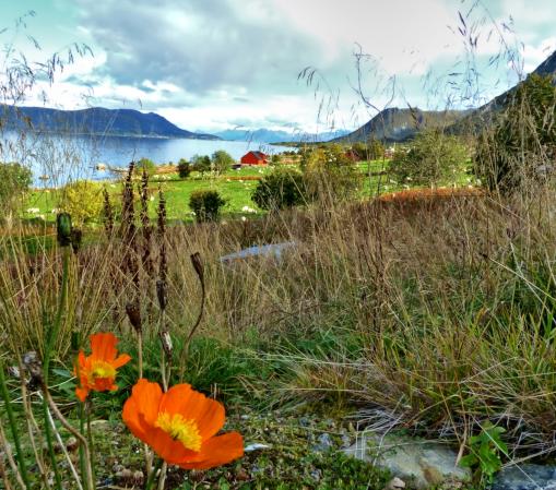 Mediterraner Flair auf den Lofoten