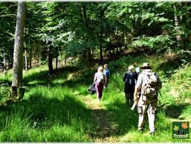 Besinnlich durch den Burgwald