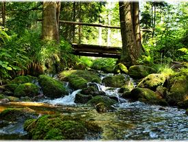 Nationalpark Bayrischer Wald (Teil 2)
