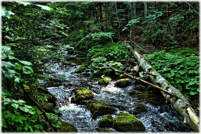 Früher wurden die Bäche im Bayrischen Wald begradigt, um Holz bei Hochwasser weiter Richtung Passau zu befördern.