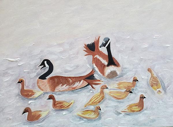 Northern Pintail Moms gathering their du
