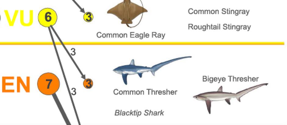 Tiburones y rayas del Mediterráneo en peligro extremo