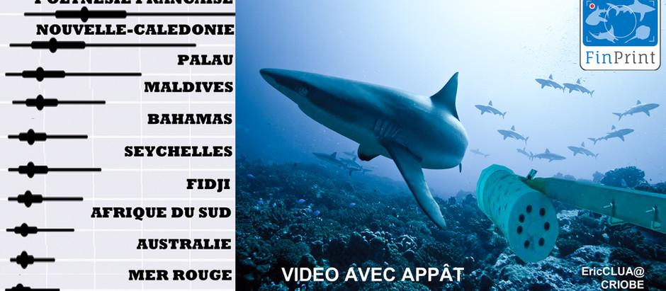 El Dr. Eric Clua es coautor del mayor estudio mundial sobre los tiburones de arrecife.