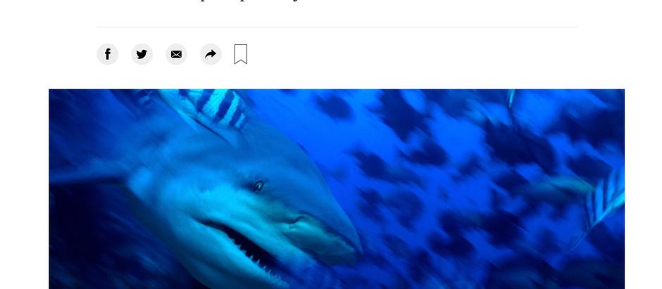 Artículo en The New York Times sobre una técnica para identificar tiburones