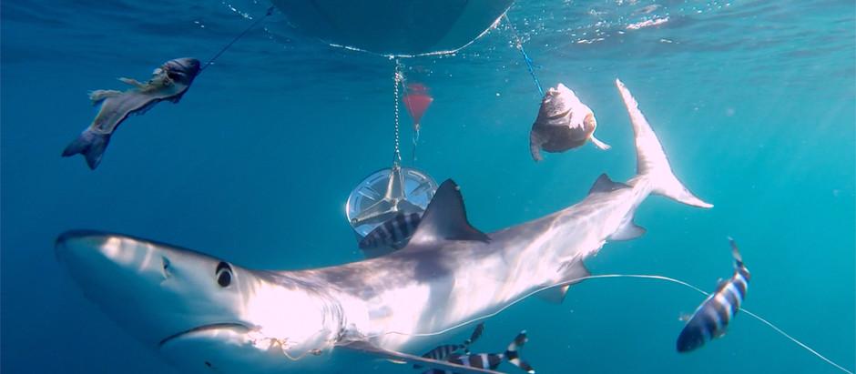 Se presenta a los medios el acuerdo de colaboración entre Shark Med y Marilles Foundation