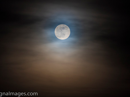 Total Lunar eclipse the night of January 20-21 2019