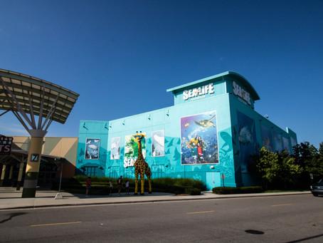 Visiting and reviewing SEA LIFE Michigan Aquarium in Auburn Hills