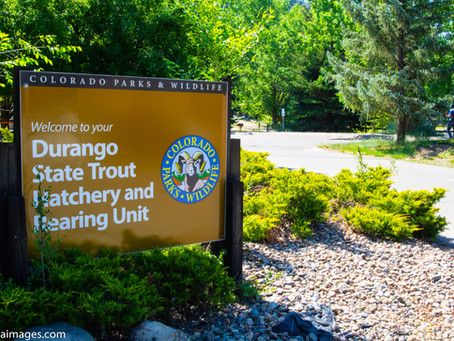 Visiting the Durango Fish Hatchery and Wildlife Museum in Durango, Colorado.