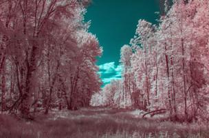 IMG_1635-Edit.jpg