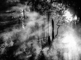 Entrance to the unknown - mist in the ga
