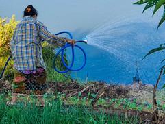Watering the Mekong River