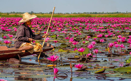 Fishing in the Red Lotus Lake.jpg