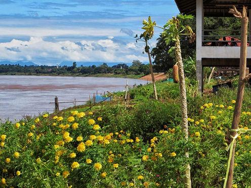 The banks of the Mekong