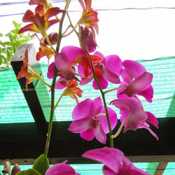 Orchids grow like weeds