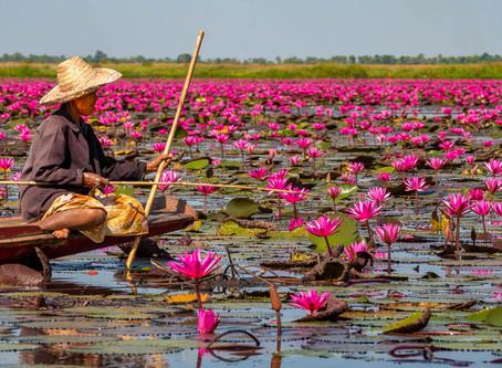 Fishing at the Red Lotus Lake