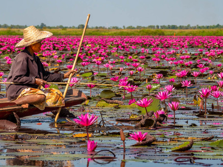 Fishing at the Red Lotus Lake