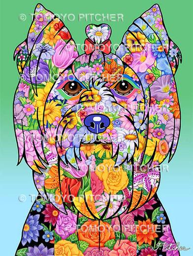 Yorkshire Terrier Showcut