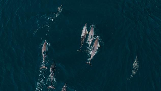 Famille de dauphins