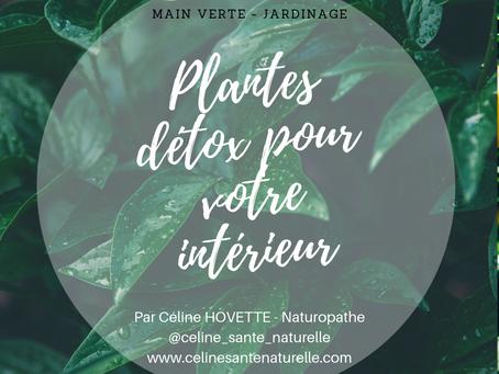 Plantes détox pour votre intérieur