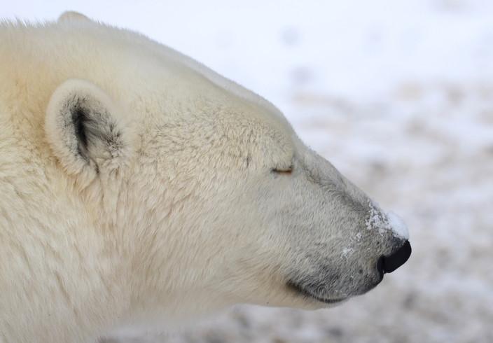 Love snow on my nose!