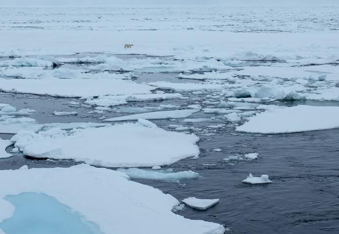 1st Norwegian polar bear in the distance