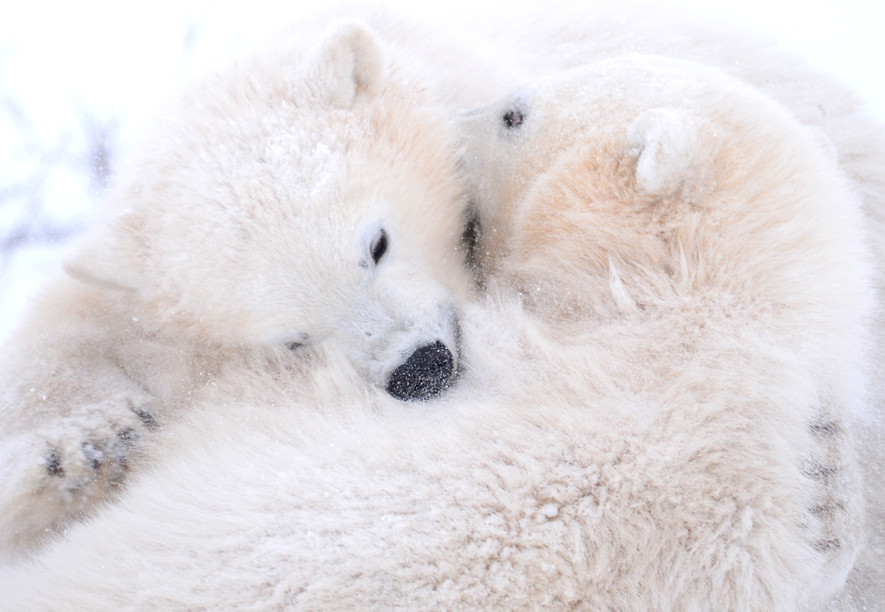 Hugs and Fur