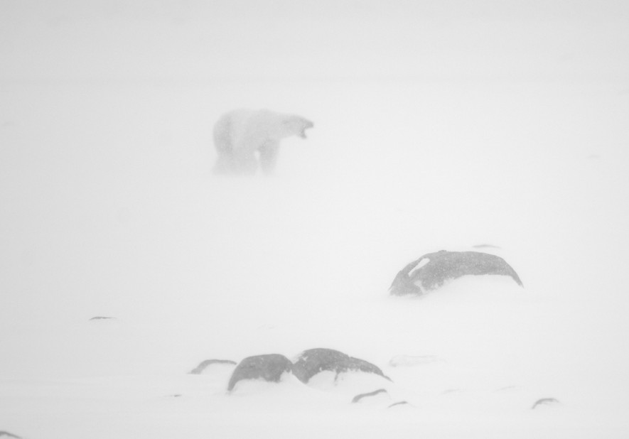 In a white out
