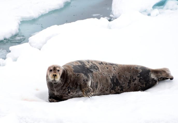 Serene seal