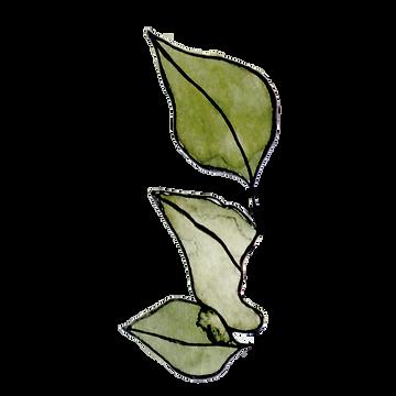 elemento-folha-cor.png