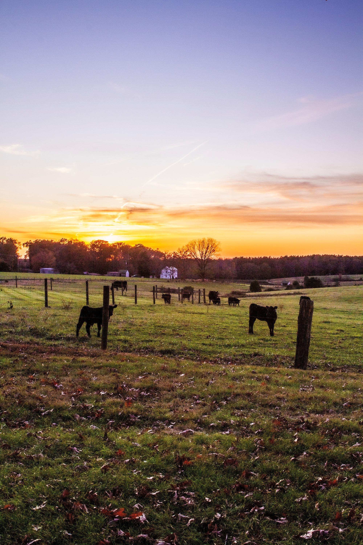 Farmland1_edited