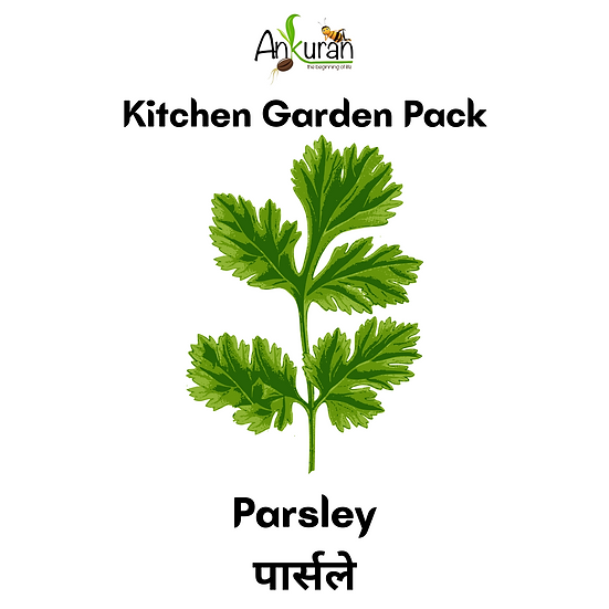 Parsley (पार्सले)