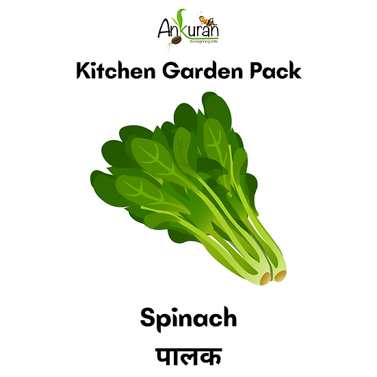 Spinach (पालक)