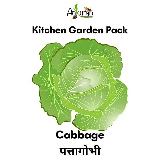 Cabbage (पत्तागोभी)