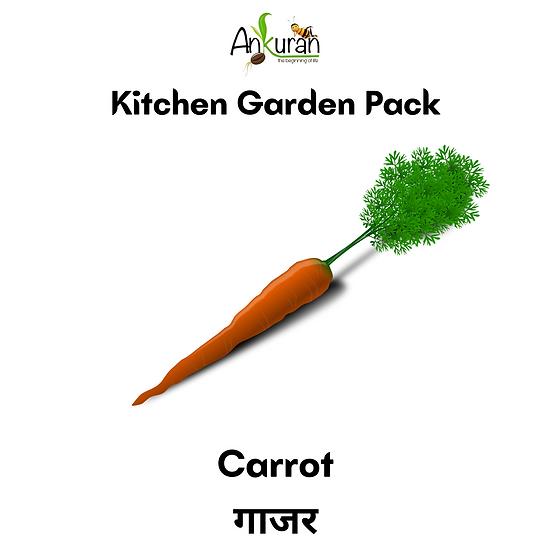 Carrot (गाजर)